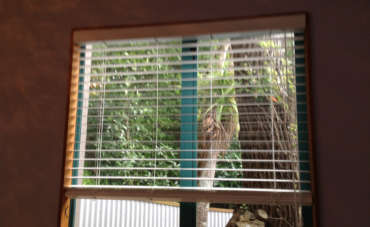 Wood Fantasy Blinds